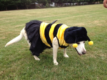 Best Dog Costume Award, Riley from High Desert Yellow Jackets